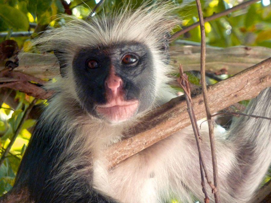 Monkey Logde Jambiani