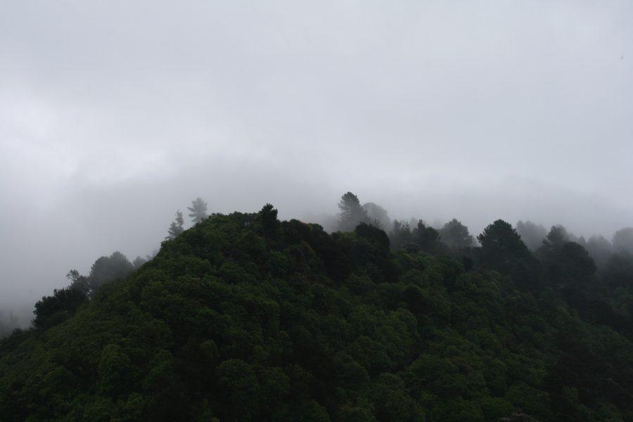 Abel Tasman National Park Baeume