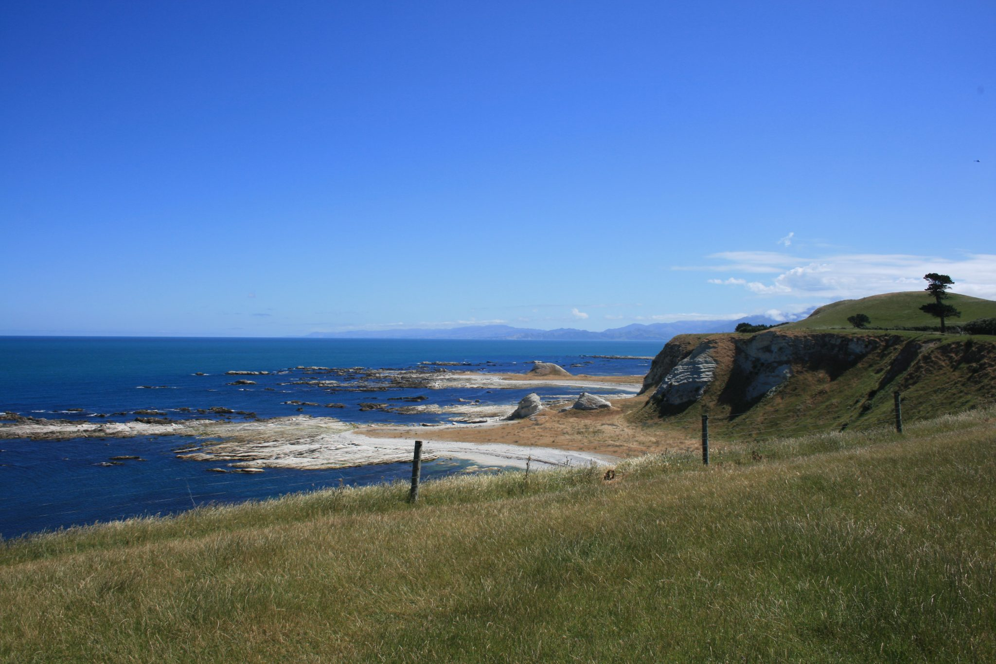 Kaikoura Seal Walk 2