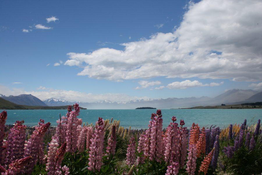 Lake Tekapo, Flowers & Mt. Cook