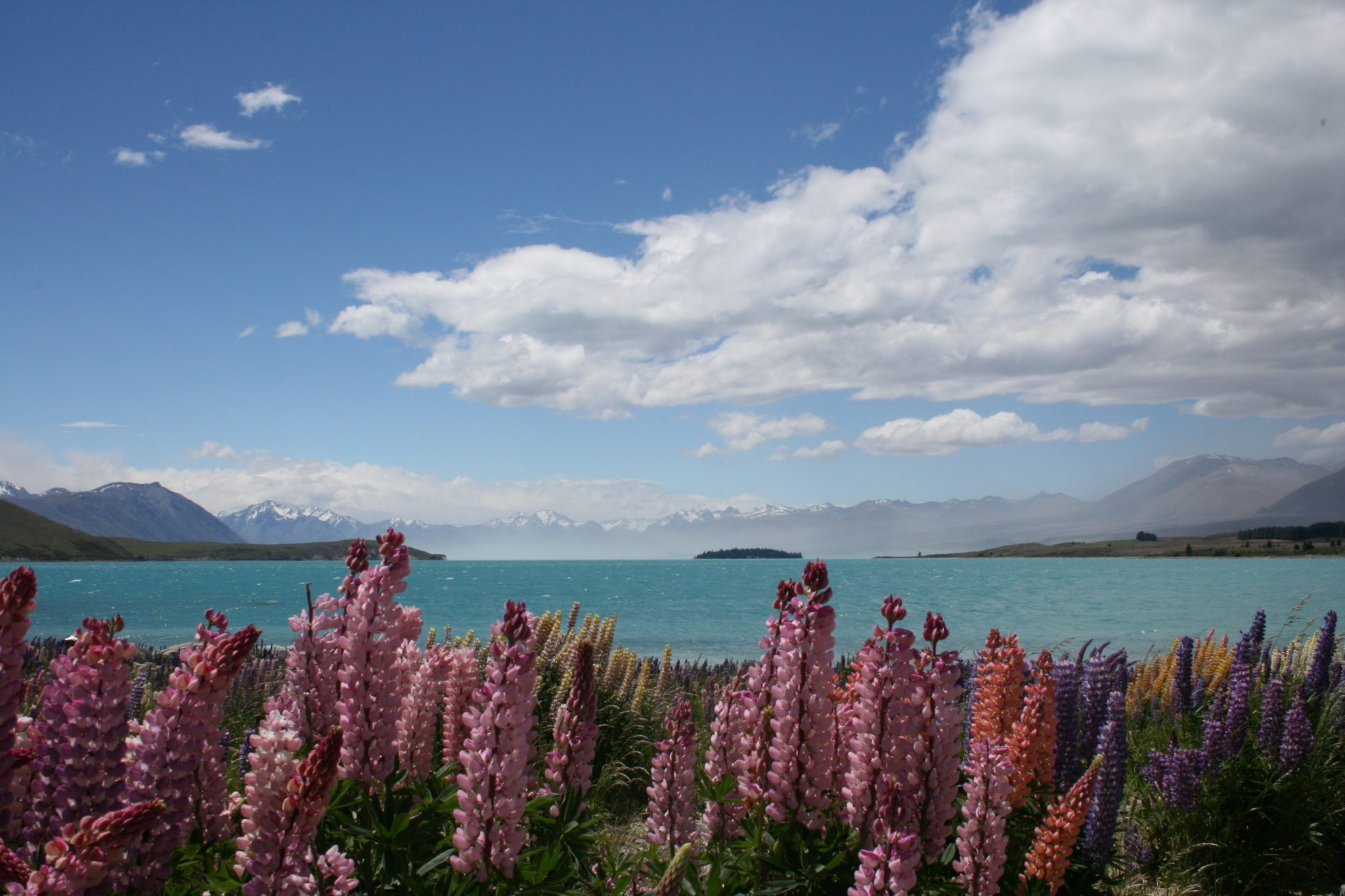 Lake Tekapo, Flowers & Mt. Cook