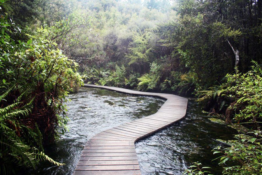 Pupu Springs Bridge Walk