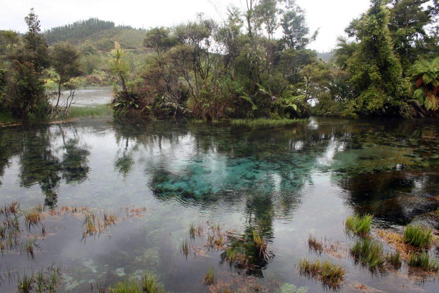 Waikoropupu Springs1