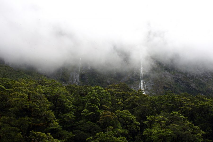 Weg nach Milford Sounds Berge, Waelder, Wasserfall