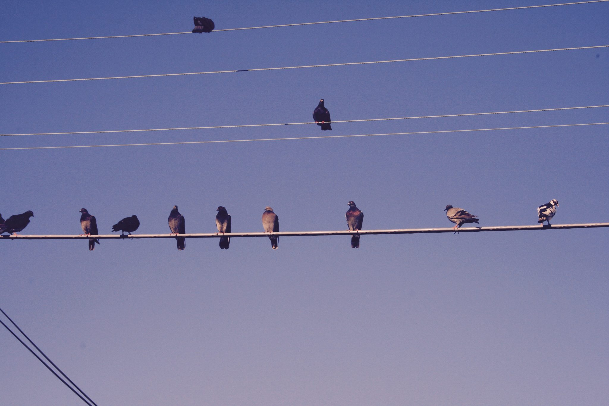 Morning Birds 1