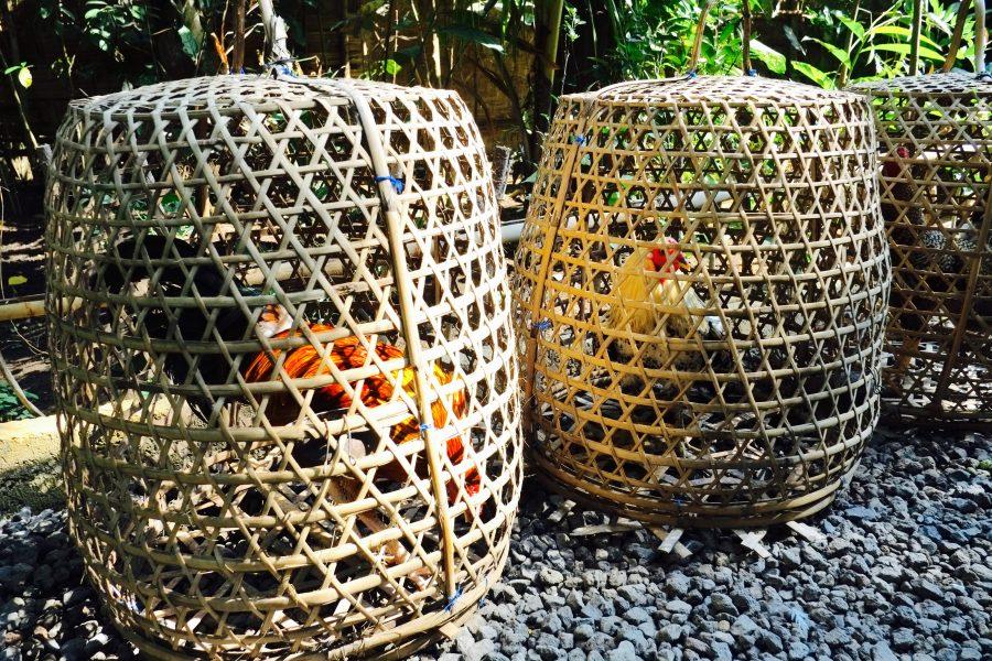Tiere Bali