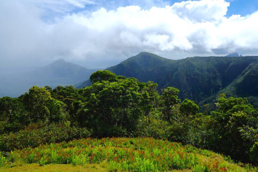 Black River National Park Mauritius