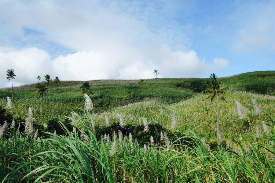 Zuckerrohr Mauritius