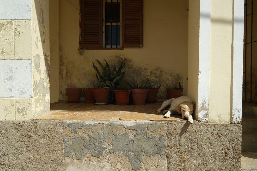 Fauler Hund Boa Vista