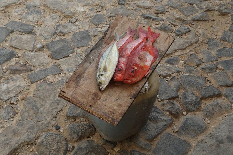 Fisch Boa Vista