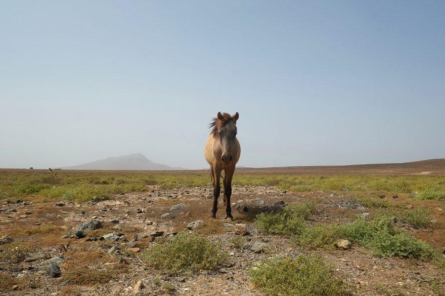 Pferde Boa Vista