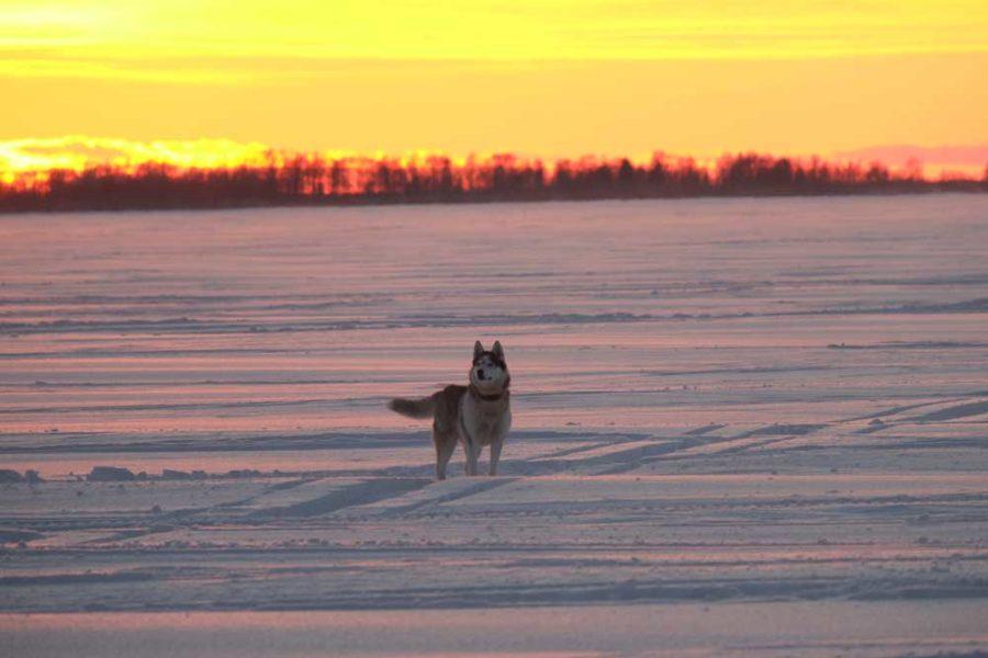Husky Finnland Safari