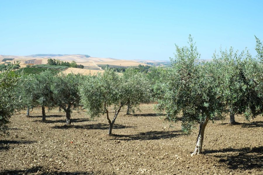 Landschaft Agriturismo Sizilien